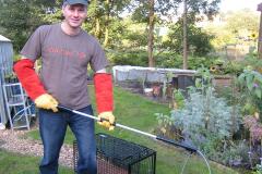 badger-rescue