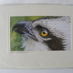 ARTful Creatures Blank Greeting Card Osprey Observation